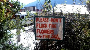 flowerpluck